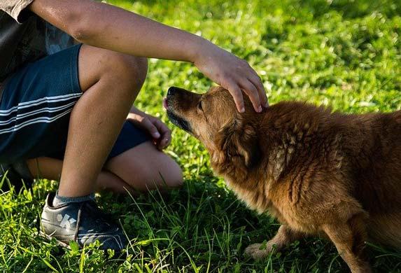 Bezuslovna ljubav! Pas zna šta je to! A, čovek...