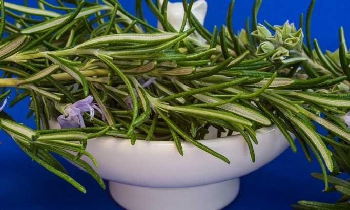 Biljka koja štiti od šloga i Alchajmerove bolesti