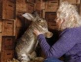 Bivša Plejbojeva zečica izgubila najvećeg zeca na svetu FOTO