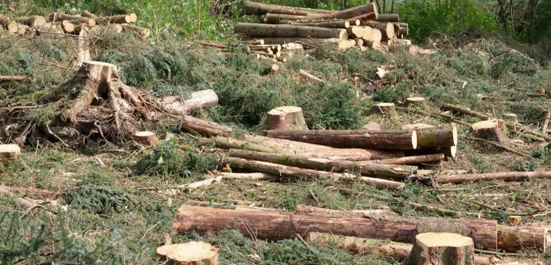 Bjelopoljac stradao nakon što se na njega obrušilo stablo