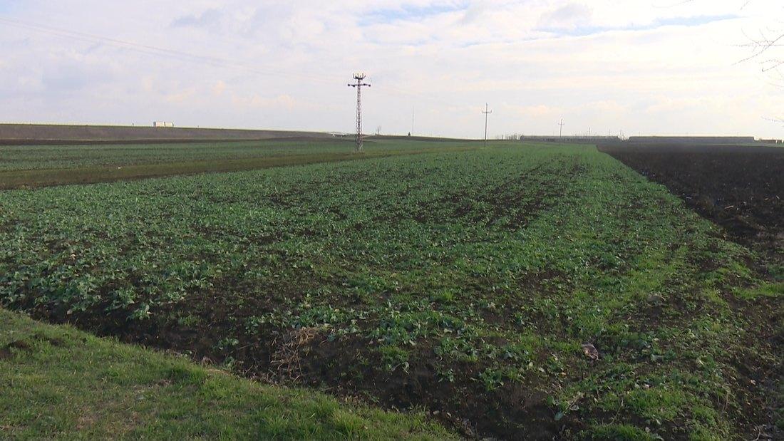 Blaga jesen pogodovala razvoju uljane repice