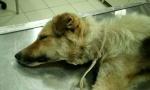 Bor: Vezali psa i čekali da ugine od gladi i žeđi