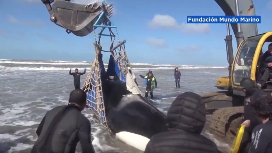 Borba za život kita ubice! (VIDEO)