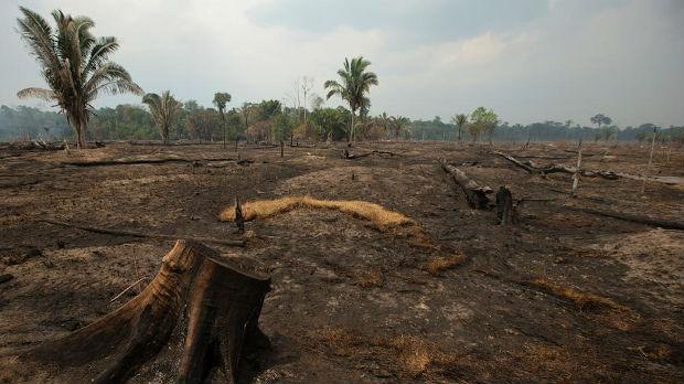 Brazil: Za godinu dana uništena prašuma velika kao Portoriko