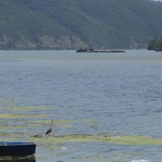 ČARI BELE CRKVE: Tamo gde Dunav ljubi nebo (VIDEO)