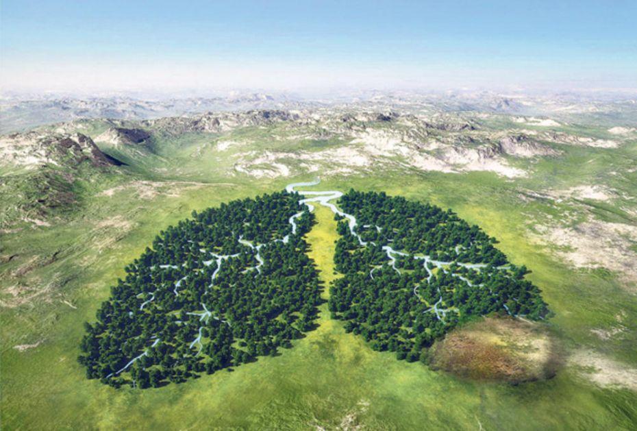 CILJ BROJ 15 UN AGENDE ODRŽIVOG RAZVOJA 2030: Nestankom šuma nestaćemo i mi!