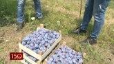 Čačanska lepotica u kragujevačkom selu VIDEO