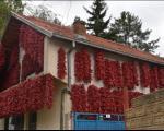 Celo selo crveno - Dani paprike u Donjoj Lokošnici kod Leskovca