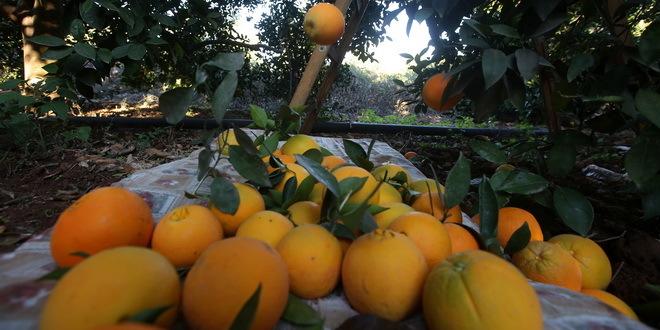 Cene soka od pomorandže u porastu na svetskim tržistima