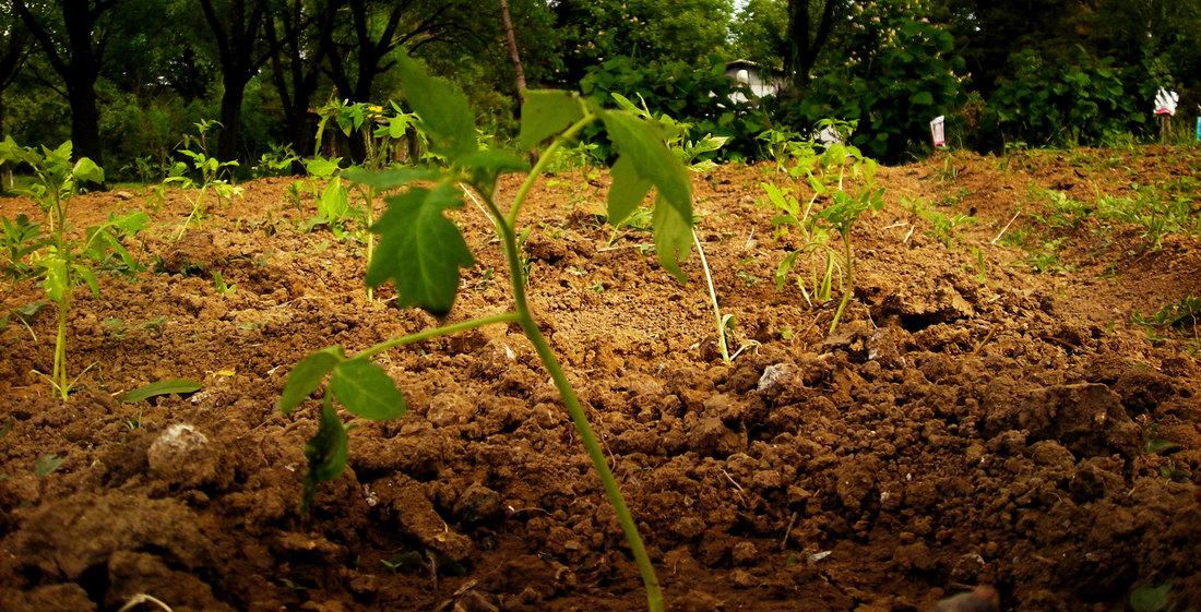 Cene u poljoprivredi veće za 15 odsto nego u julu 2018.