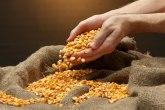 Cenu kukuruza podigli finansijski fondovi, Kina kupuje velike količine