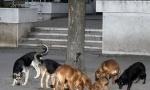 Čopor pasa izujedao niškog maratonca