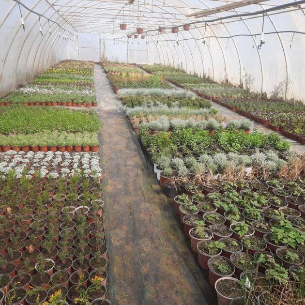Cvećarstvo kao primer dobrog posla (AUDIO)