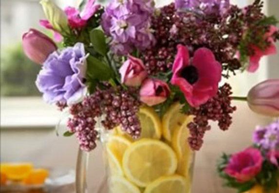 Cveće koje se sadi u aprilu! Lako se neguje i cveta do jeseni!