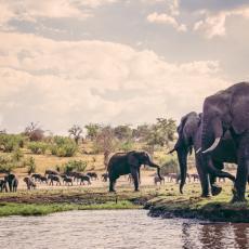DA LI BISTE KUPILI SLONA? Namibija oglasila prodaju 170 velikih sisara, a razlog je potpuno neočekivan