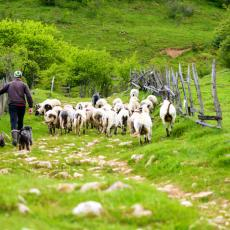 DIRLJIVA PRIČA POLJOPRIVREDNIKA: Već deset godina JEDEM ISTU VEČERU svaki dan, kao i moje ovce!