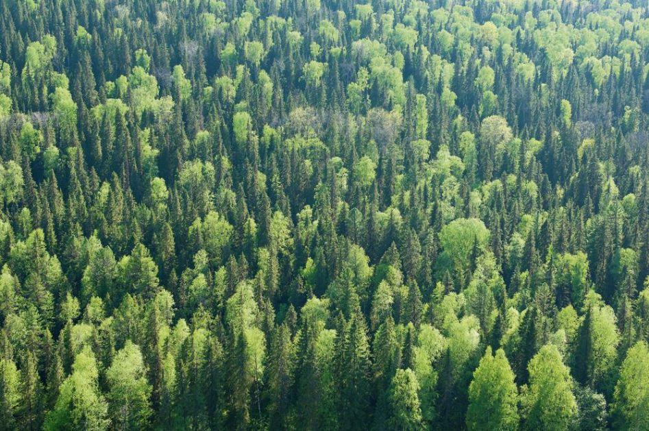 DOBRE VESTI: U poslednjih 20 godina ponovo izrasla šuma veličine Francuske, ali stručnjaci kažu da je pred nama dug put