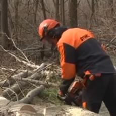 DOBRO PLAĆEN POSAO, A NIKO NEĆE DA RADI: U Srbiji je lakše nabaviti modernu mašinu nego dobrog drvoseču!