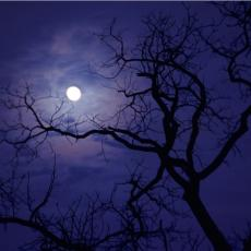 DONOSI NESREĆU I SMRT: Ovo drvo NIKAKO ne smete imati u svom dvorištu!