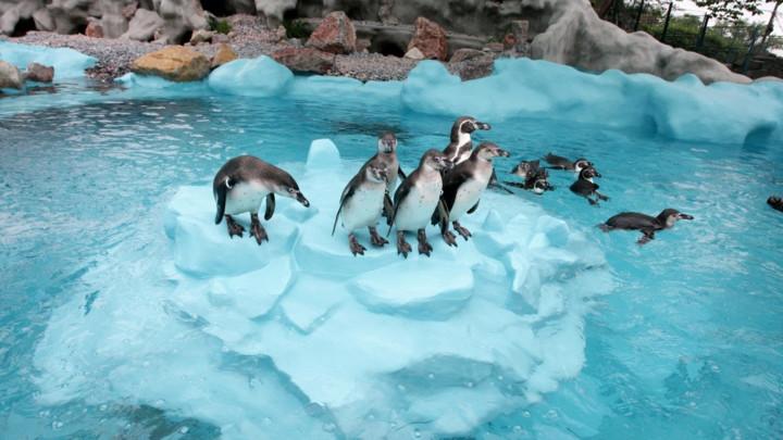 DŽINOVSKI PINGVINI veličine čoveka živeli na Novom Zelandu!