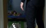 Da li će Srbija uvesti kastraciju pedofila