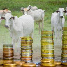 Da li će i srpski seljak prodavati krave za bitkoine: Šta kaže ministar Nedimović modernizaciji poljoprivrede?