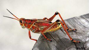 Da li ćemo zbog klimatskih promena uskoro početi da jedemo insekte?