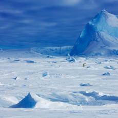 Da li je ovo moguće? Antarktik prekriven zelenim snegom (VIDEO)