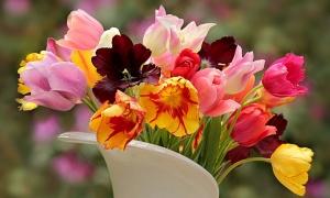 Da vam dom uvek miriše: Uz pomoć ovih saveta cveće u vazi ostaje sveže duže od nedelju dana