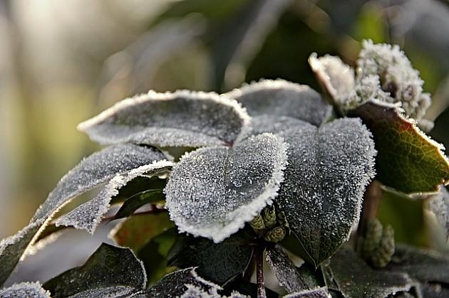 Danas hladno, moguć slab sneg