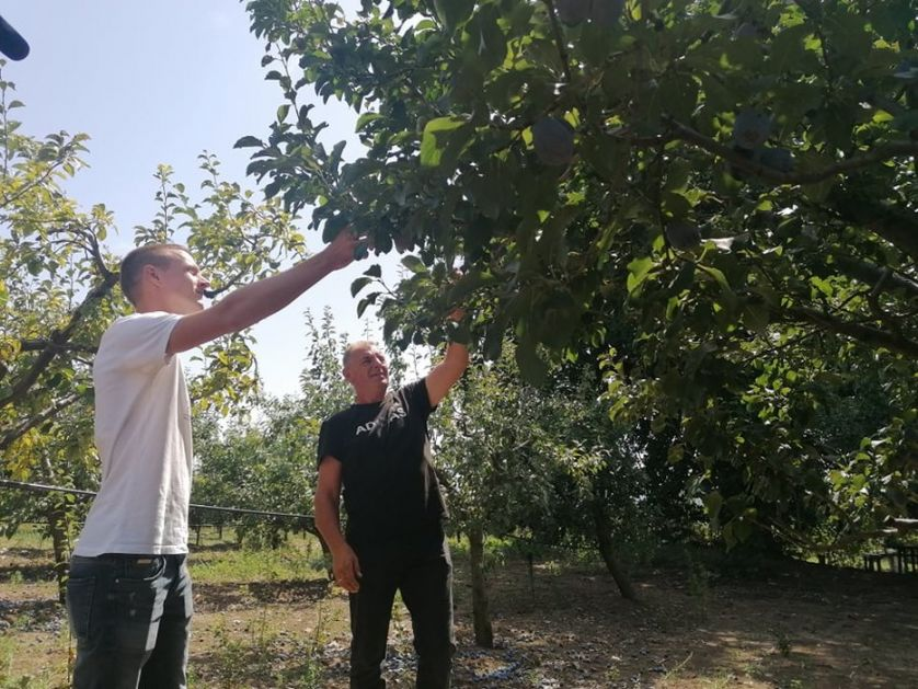 Dani šljive u Stragarima kod Kragujevca