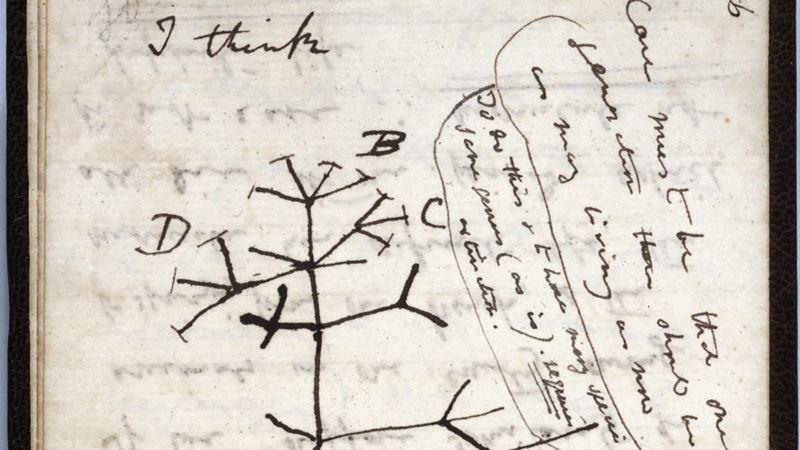 Darvinove sveske nestale pre 20 godina ipak verovatno ukradene