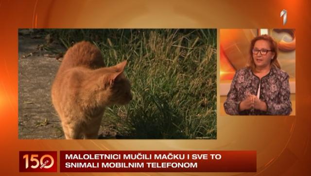 Dečaci mučili mačku i snimali sve mobilnim - ko je, zapravo, kriv? VIDEO