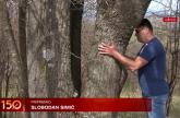 Dendroterapija: Zašto ljudi grle drveće? VIDEO