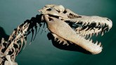 Dinosaurusi i pustinja Gobi: Zemlja drevnih stvorenja