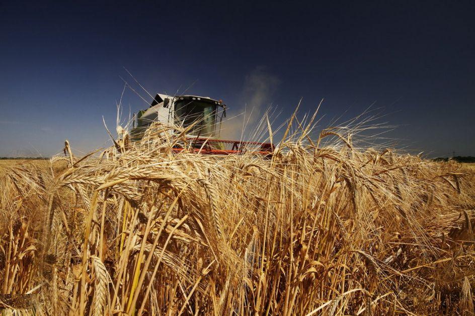 Dobar rod i kvalitet pšenice-za bolju cenu prodati kasnije