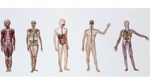 Doniranje tela medicini: Telo zaveštano nauci – ali korišćeno za testiranje bombi