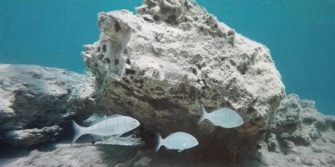 Dramatično ubrzanje klimatskih promena na dnu okeana opasnost za morski svet