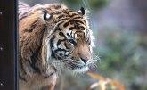 Drastične mere u zoo-vrtu: Žrtvovaće životinje da bi nahranili mesoždere