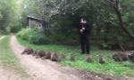 "Drevnom melodijom ""očarao"" rakune, hrle iz šume kad čuju flautu (VIDEO)"