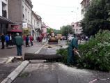 Drveće posečeno u Aleksincu koristiće komunalno preduzeće, a stabla iz Grdelice socijalno ugroženi