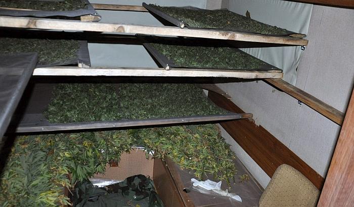 Držao sušaru za marihuanu u kamp kućici