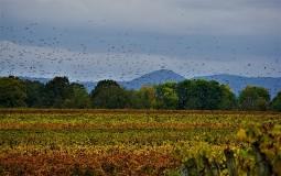 EEA: Neće biti ispunjen ključni cilj zaštite biodiverziteta