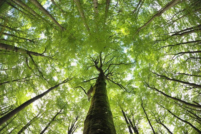 EU preko Austrije i Slovačke podržava šumarstvo u Srbiji