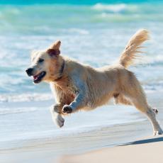 Električne ogrlice za dresuru pasa i mačaka će uskoro biti zabranjene u Velikoj Britaniji!