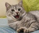 Energetska bomba: Mačke su, pa mačke