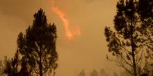 Luštica: Borba sa vatrenom stihijom i dalje traje