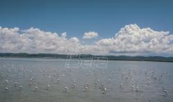 Flaminzi i druge ptice preplavili lagunu u Albaniji gde zbog pandemije ne dolaze ljudi