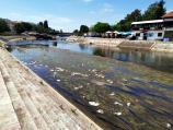Foto-vest: Smeće pluta Nišavom