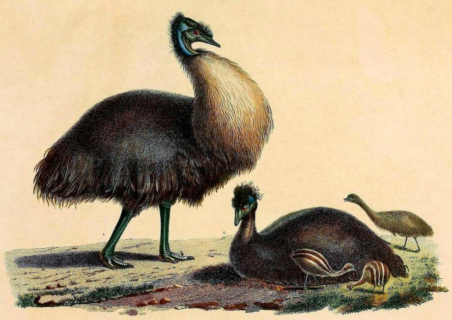 GODINAMA JE SKUPLJAO SITNICE PO PLAŽI, A NIJE NI ZNAO DA JE NIŠAO NA VAŽNO OTKRIĆE: Kristijan je našao jaje davno izumrle ptice!
